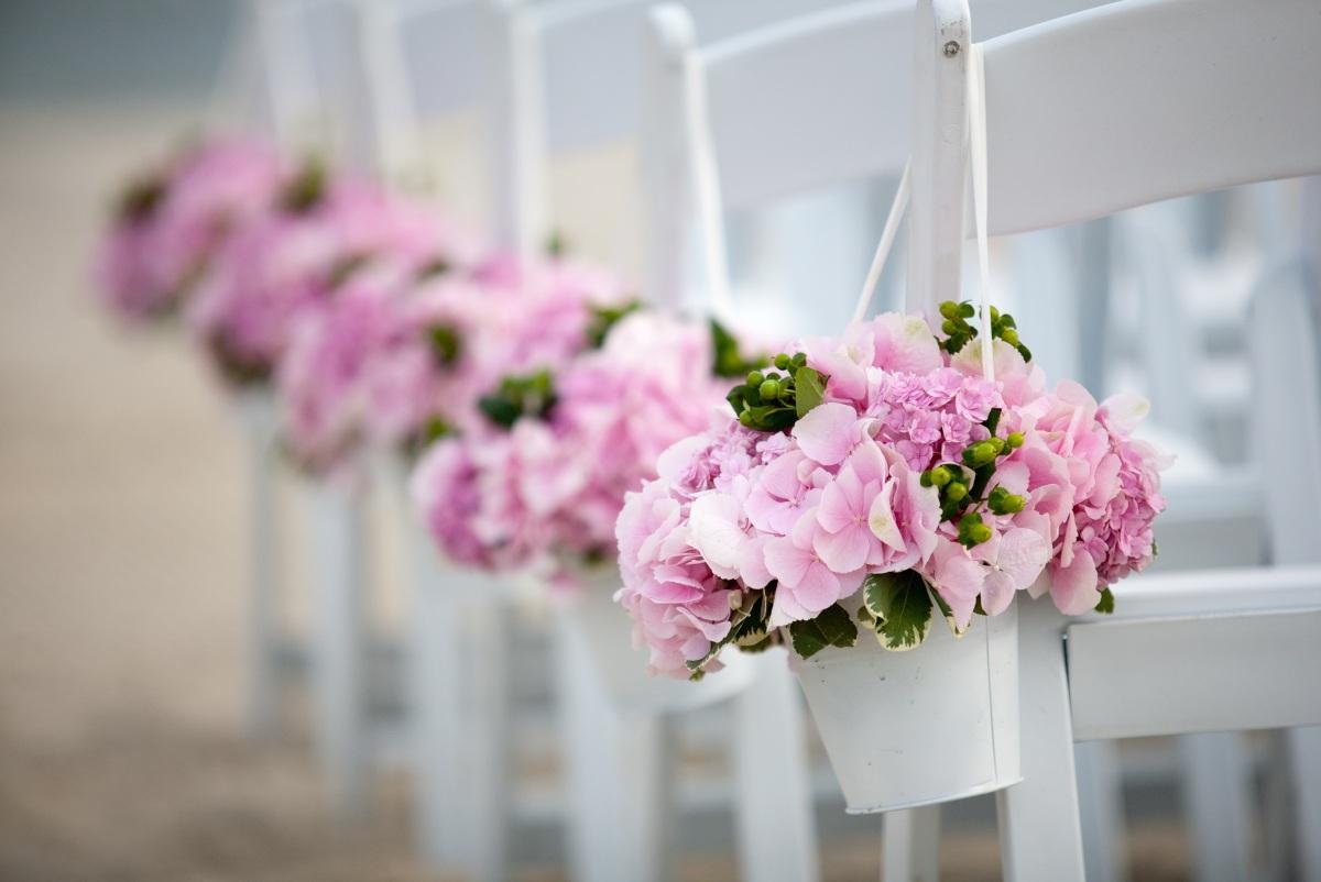 La vie en rose   Paniculata in bloom